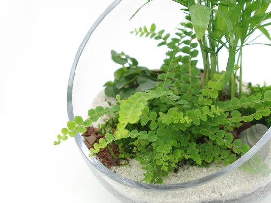 Realiser un terrarium - The Black Leaf - blog vegetal
